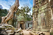 Angkor Temples complex - ruins of Ta Prohm Temple, Angkor old Khmer Empire, Cambodia, Asia