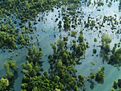 Aerial view of mangroves and vegetation in the rivers of Johor