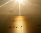 Freight ships sail in the ocean on a bright orange warm day