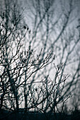 Leafless twigs and branches, tree in winter, Ulm, Baden-Wuerttemberg, Germany