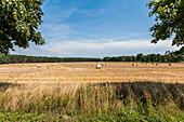 Harvested grain field on the island of Ruegen, Mecklenburg-Western Pomerania, north Germany, Germany