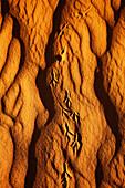 Bird Tracks in Sand
