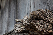 Old Tree Trunk Abstract