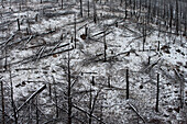 Forest Fire Remnants Covered in Snow, Colorado, USA