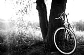 Bicycle Leaning Against Tree