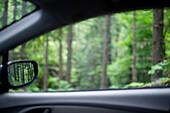 View of Forest Through Car Window