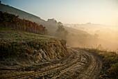 Dirt Road Along Hillside Vineyard on Foggy Morning, Roero, Piemonte, Italy