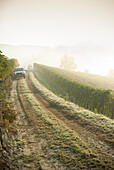 Truck Driving Down Foggy Vineyard Path, Roero, Piemonte, Italy