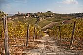 Vineyard With Hillside Village in Background, Barbaresco, Italy