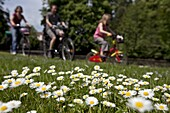 Daisies In Front Of A Family Cycling, Bike Path On The Paris-Mont Saint Michel Route, Chartres (28), Eure-Et-Loir, France