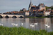 Group Of Swans On The Loire, The Stone Bridge, Town And Chateau, Gien, Loiret (45), France