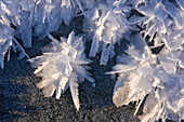 Macro View Of Ice Crystals (Hoar Frost) On The Frozen Surface Of A Small Pond Following An Extended Period Of Sub Zero Winter Weather In Alaska's Tongass Forest.