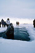 Group Of People Watching A Whale Breathing Through A Man Made Ice Hole During The 1988 Rescue Of Three California Gray Whales Trapped In Sea Ice Near Point Barrow, Arctic Alaska, Winter/N