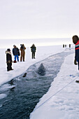 Longest Eskimo Made Breathe Hole During The 1988 California Gray Whale Rescue Near Point Barrow, Arctic Alaska, Winter/N