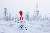 Hoarfrost Covered Spruce Tree With A Red Christmas Ribbon Hanging On It, Fog, Winter, Eureka Summit, Alaska.