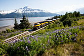 View of the Alaska Railroad passenger train passing Bird Point and Turnagain Arm, Southcentral Alaska, Summer