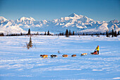 Recreational dog mushing in Denali State Park with the  Alaska Range and Mt. Mckinley in the background, Alaska