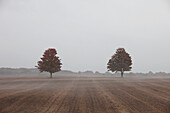 'Two Trees In A Farm Field In Autumn;Caledon Ontario Canada'