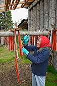 'A Woman Cuts Up Dried Red Sockeye Salmon (Oncorhynchus Nerka) Into Strips At A Fish Camp On Six Mile Lake Near Nondalton;Alaska United States Of America'