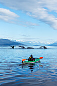 A sea kayaker watches as a group of Humpback whales lift their flukes, returning to the bountiful waters of SE Alaska's Stephens Passage, Tracy Arm and Coast Range mountains rise beyond. Composite. MR_Ed Emswiler, ID#12172012A