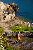 Tourist on cliff route, Saints Bay Harbour, Channel Islands, England