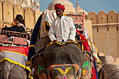 Elephants going up and down path to Amber Fort, Jaipur, Rajasthan, India