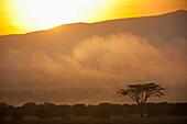 Acacia in front of sunrise behind Mt Kenya, Ol Pejeta Conservancy, Kenya. © Ian Cumming / Axiom