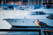 Naki, Kouyioumtzis, nobody, Outdoors, Day, Side View, Full Length, Focus On Foreground, One Animal, Sunlight, Yacht, Harbor, City, Balance, Freedom, Luxury, Scale, Wealth, Motorboat, Waterfront, Vancouver, British Columbia, Canada, Animals In The Wild, Se