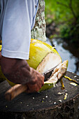 Alex, Adams, Outdoors, Day, Part Of, Human Arm, Men, One Person, Strength, Agriculture, Travel Destinations, Travel, Freshness, Idyllic, Journey, Real People, Tranquility, Bali, Ubud, Exotic, Fruit, Verdant, Indonesia, Cutting, Knife, Open Air, Outside, E