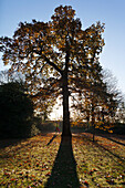 Doug, McKinlay, Outdoors, Day, Unrecognizable Person, One Person, Nature, Growth, Exercising, Healthy Lifestyle, Training, Silhouette, Backlit, Autumn, Sunlight, Tree, Idyllic, Tranquility, Beauty In Nature, Park, Sport, Jogging, Clear Sky, Place Of Inter