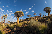 Lars, Froelich, nobody, Outdoors, Day, Wide Angle, Nature, Morning, Sunlight, Cloud, Cloudscape, Landscape, Mountain, Tree, Rock Formation, Idyllic, Tranquility, Scenics, Beauty In Nature, Sky, Namibia, Rock, Plant, Botany, quiver tree, cirrocumulus flocc