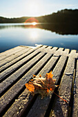 Sunrise Over Leaf On Floating Dock In Mont-Saint-Bruno National Park, Quebec Canada