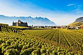 Vineyards and castle, Aigle, Switzerland