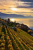 Vineyards, Saint-Saphorin, Lavaux, Switzerland