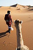 A man leads his camel over the sand dunes, Morocco
