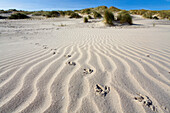 Bbird tracks in the sand, dunes, Juist Island, North Sea, East Frisian Islands, East Frisia, Lower Saxony, Germany, Europe