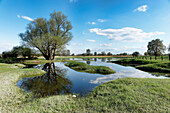 Flooded meadow in Lebus, River Oder, Maerkisch-Oderland, Brandenburg, Germany