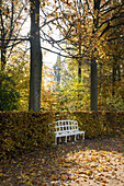 Autumn foliage and bench in Hofgarten park, Ansbach, Franconia, Bavaria, Germany