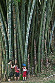 European family, woman with two children in front of giant bamboo, Peradeniya Botanical Garden, Kandy, Sri Lanka, South Asia