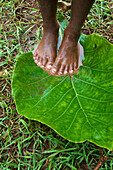 Girl standing barefoot on wet ground on a huge leaf, Niki Niki, Atoin Meto village, indigenous people, West Timor, Eastern Nusa Tenggara, Lesser Sunda Islands, Indonesia, Asia