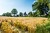 View over a grain field to housing complex, Hamburg-Duvenstedt, Germany