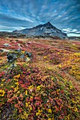 Lava and moss landscape in the autumn with Mt  Stapafell in the distance, Snaefellsjokull National Park, Iceland