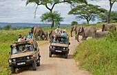 Tarangire National Park Tanzania Africa safari close encounter with elephants crossing road between vehicles close to van, exciting, fun, photos