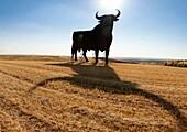 Roadside Sign of bull, iconic Spanish symbol