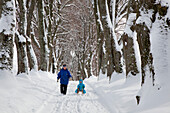 Woman pulling child along on a sledge, alley of lime trees, Kurfuerstenallee in winter, Marktoberdorf, Allgaeu, Bavaria, Germany