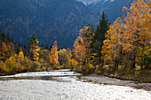 Ammer valley with Autumn foliage, near Oberammergau, Bavaria, Germany