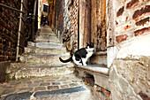 Katze auf einer Stufe, Impassa des Ursulines am Zitadellenhügel, Lüttich, Wallonien, Belgien