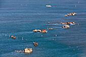 Aerial view of islands in the Venetian lagoon, Casone, Fishing huts on stilts, Pellestrina, Mediterranian Sea, Veneto, Italy
