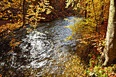 River of Wuerm flowing between beech trees in autumn colours, valley of Wuerm, Starnberg, Upper Bavaria, Bavaria, Germany