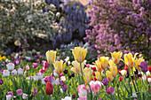 Frühling im Hermannshof, Weinheim, Baden-Württemberg, Deutschland, Europa